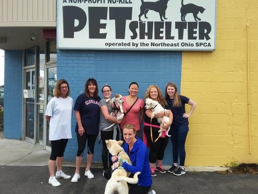 Selman & Company volunteers at Northeast Ohio SPCA Pet Shelter